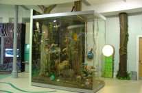 Rainforest – Leeds City Museum